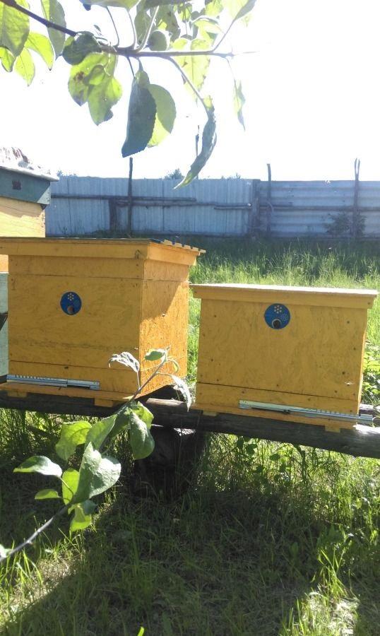 производит продажа пчел на авито курская область Видео Красивые Лезгинские