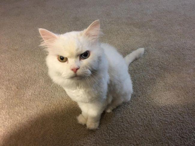 Фото с котом подписать
