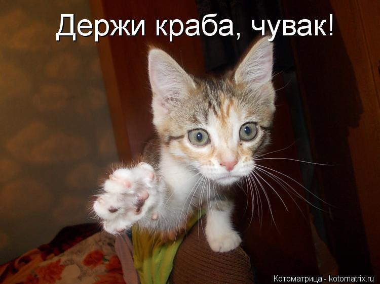 Держись картинки прикольные котики, очень смешная добрым