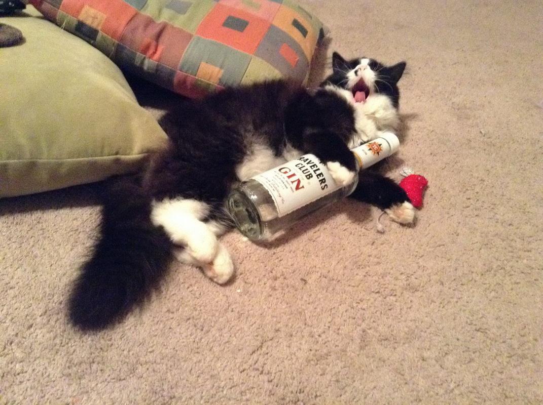 Кот собутыльник картинки