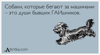 Собака лает ветер уносит картинка