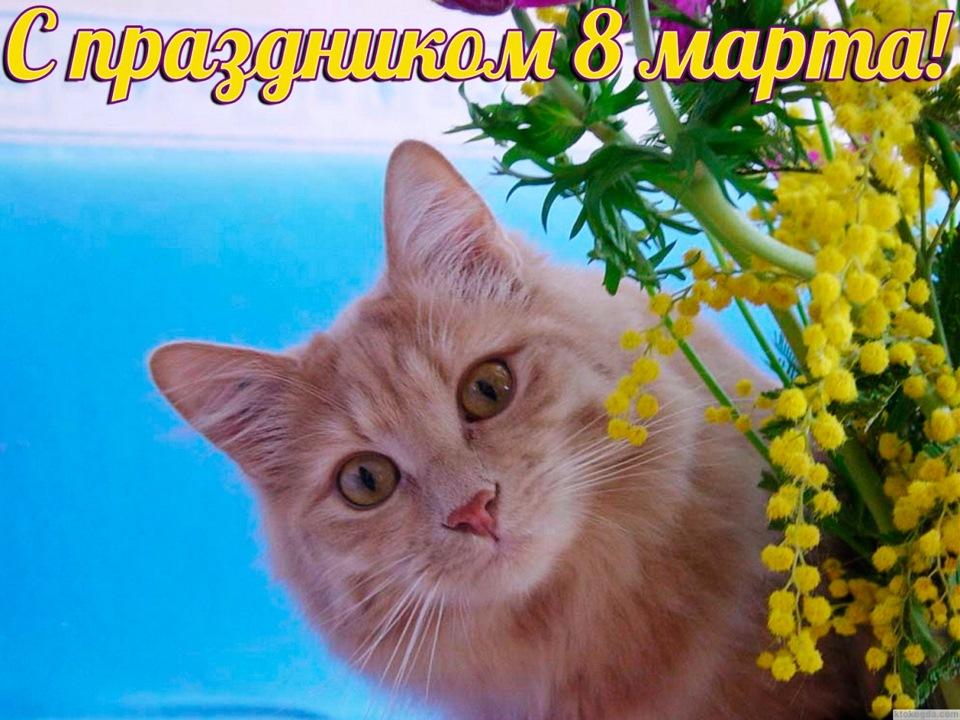 Открытки старинные, коты 8 марта картинки